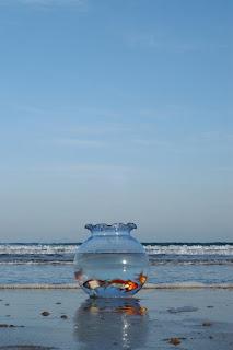 Pecera en la playa