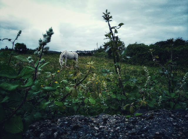 horse on a field, Moycullen