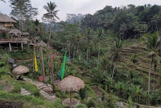 Tegalalang Rice Terraces, Isla de Bali, Indonesia.