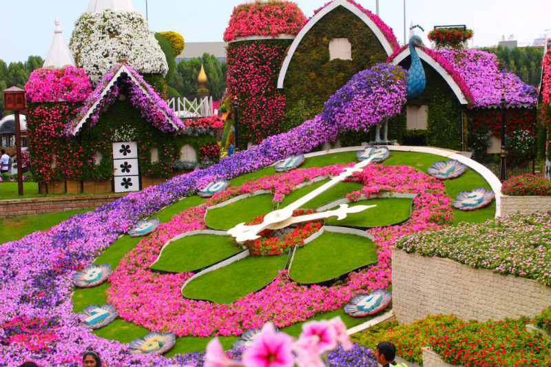 Floral Display of Peacock in Dubai Miracle Garden