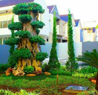 Taman dengan bonsai