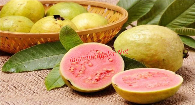 Kırmızı Guava