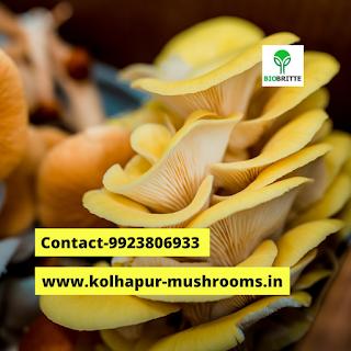 Milky Mushroom For sale