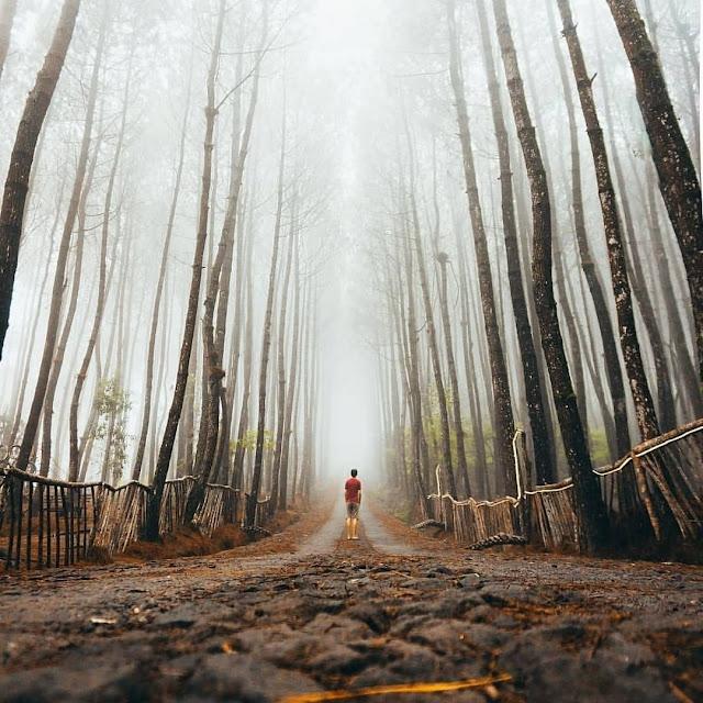 Top Selife Hutan Pinus Kragilan Magelang