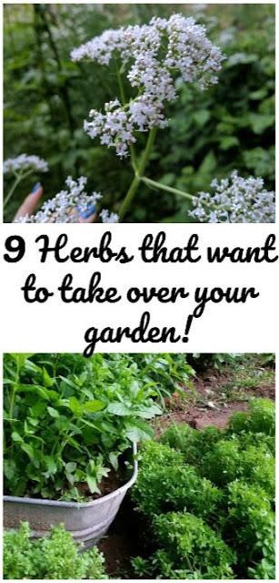 invasive garden herbs