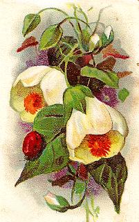 flower botanical artwork old antique illustration digital clipart
