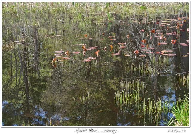 Ipswich River: ... mirroring...