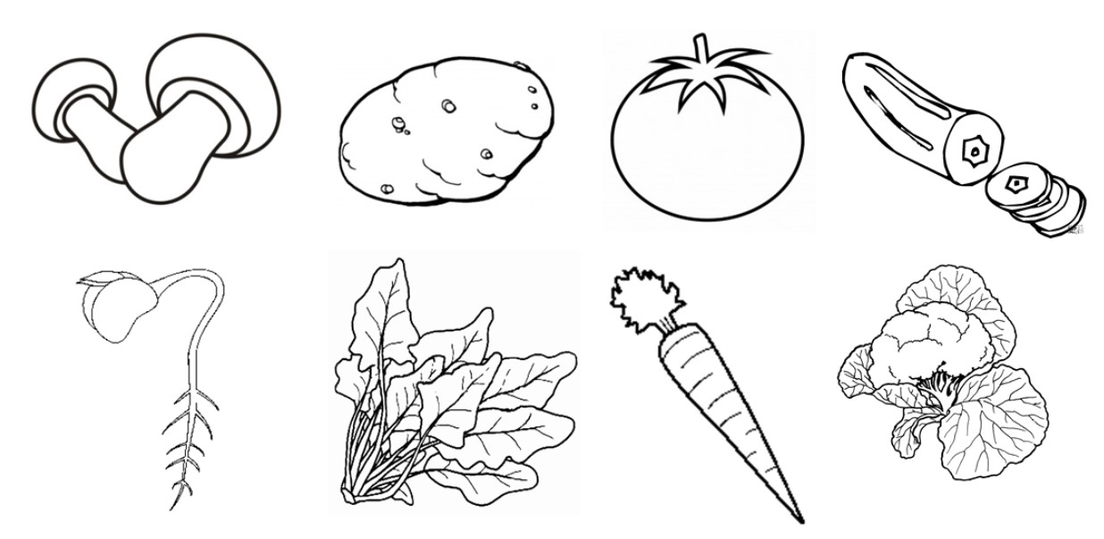 Mewarnai Gambar Sayuran Untuk Anak Paud Tk Sd Kanalmu