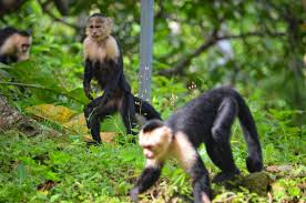 Hoolongpar Gibbon Wildlife Sanctuary