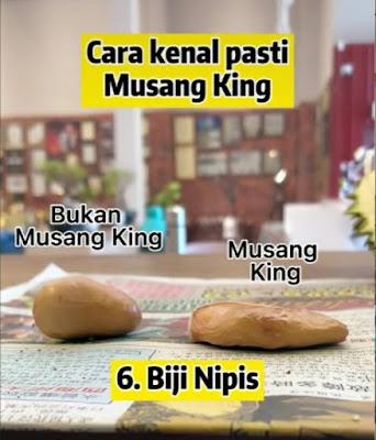 TIPS, DURIAN MUSANG KING, MUSANG KING, KENALPASTI DURIAN MUSANG KING, CIRI-CIRI DURIAN MUSANG KING, CARA MENGENAL DURIAN MUSANG KING
