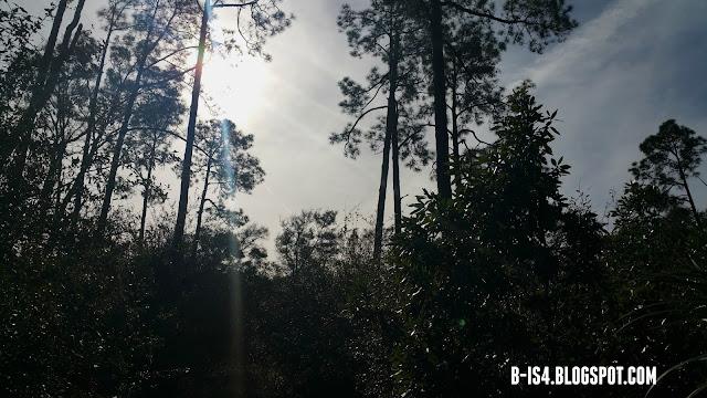 Jacksonville, Florida, Eco