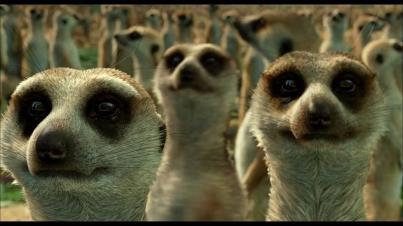Meerkats life of pi - photo#39