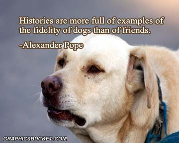 funny dog histories are more full of examples of the fidelity of dogs than of friends.