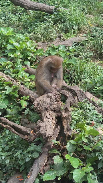 【台中旅遊景點推薦】大坑郭叔叔獼猴生態園區