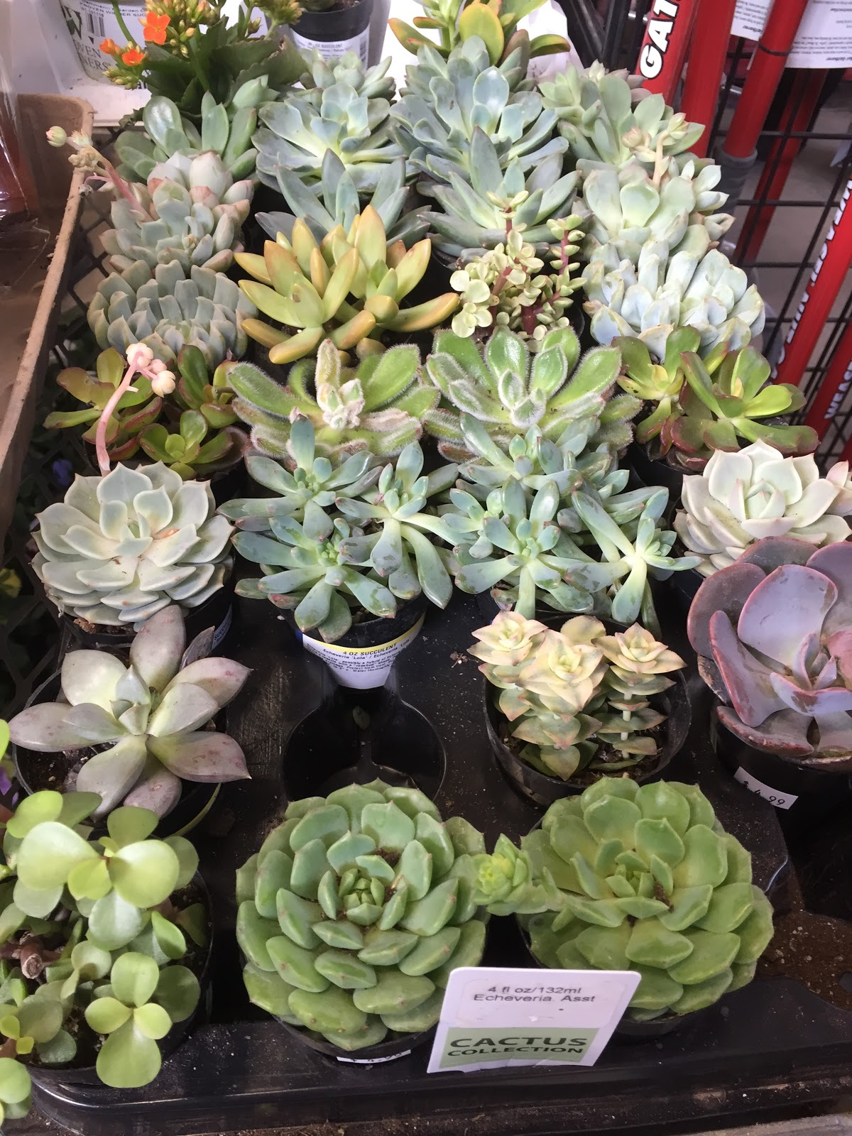 mixed succulents