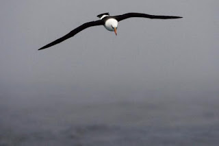 Odors show seabirds for home water