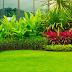 Bingung Menghias Taman Dengan Rumput? Berikut 4 Jenis Rumput Taman Yang Bisa Anda Coba