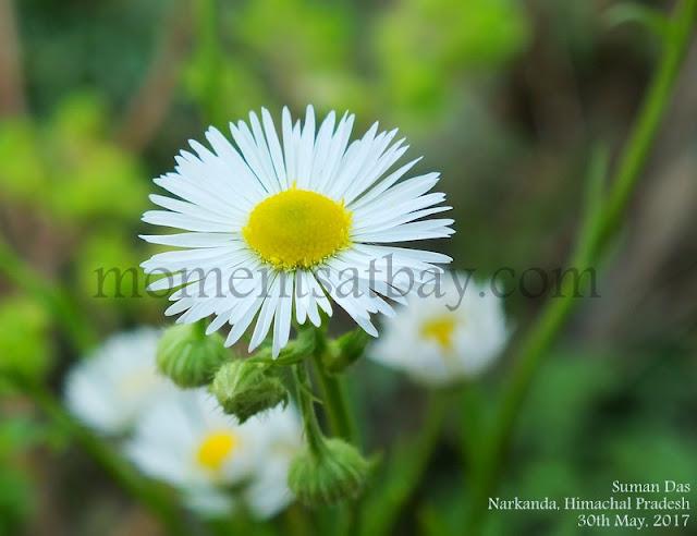 Serene Beauty and Silent Felicity momentsatbay