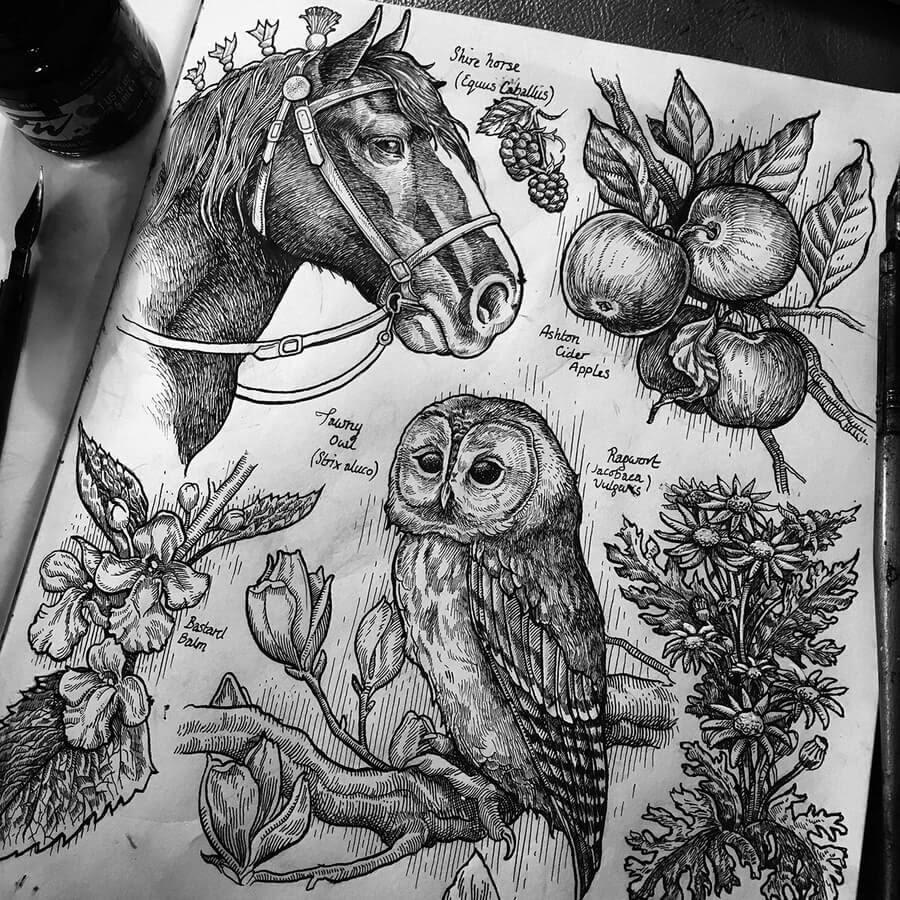02-Horse-Owl-Fruit-and-flowers-Philip-Harris-www-designstack-co