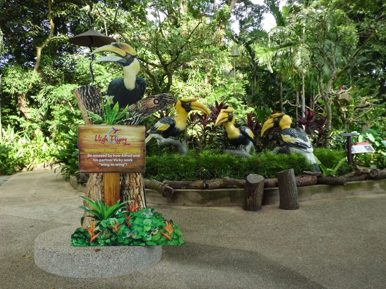 Hornbill picture from Singapore Jurong Bird Park