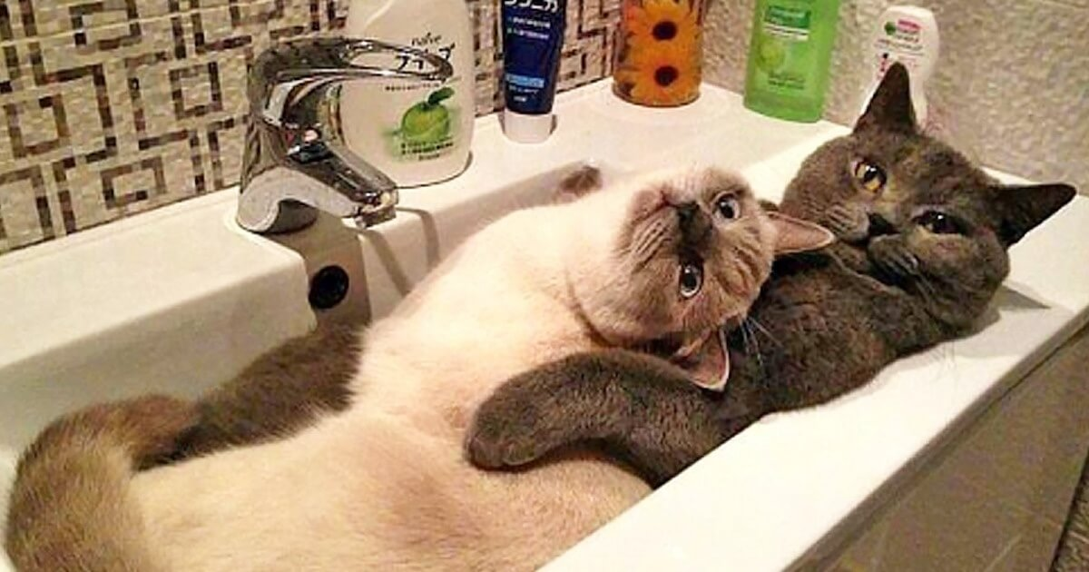 19 Hilarious Pictures Of Cats Being Cats