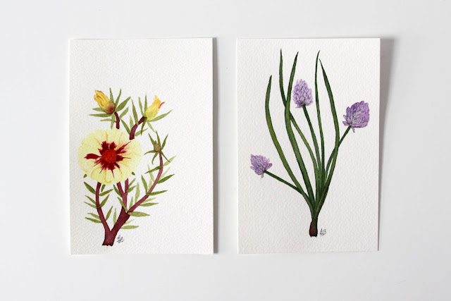 watercolor paintings, botanical watercolors, moss roses, chives, garden flowers, Anne Butera, My Giant Strawberry