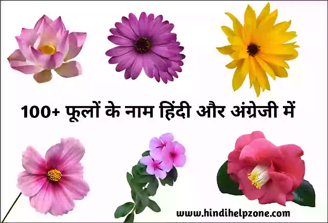 flowers name list in hindi and english