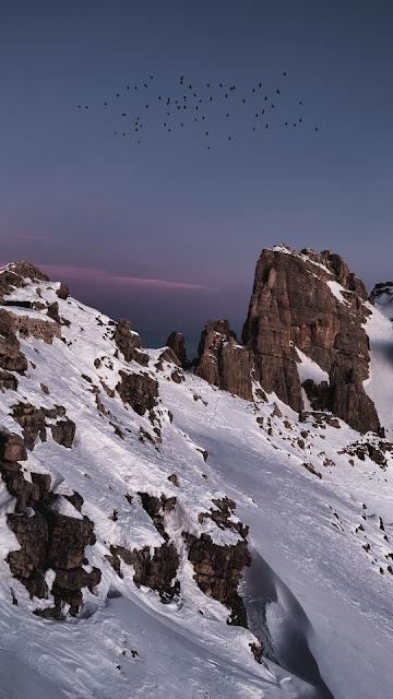 HD Wallpaper Birds, Snow, Rocks, Mountain