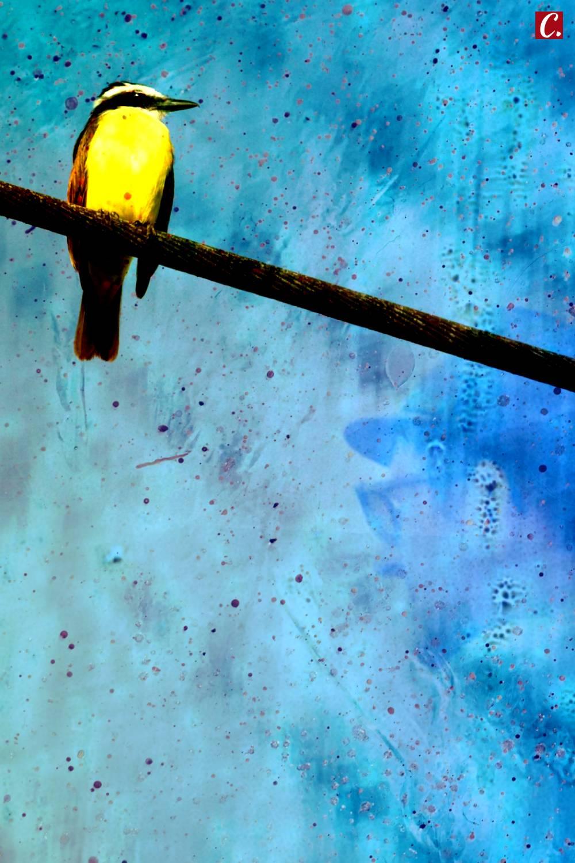 ambiente de leitura carlos romero cronica conto poesia narrativa pauta cultural literatura paraibana reflexoes tempo sensacoes impulsos pensamento clovis roberto