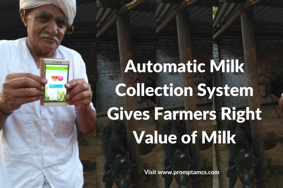 How Automatic Milk Collection System Gives Marla Farmers Right Value of Milk
