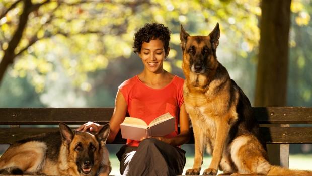 pet sitting is it right for your dog australian dog lover. Black Bedroom Furniture Sets. Home Design Ideas