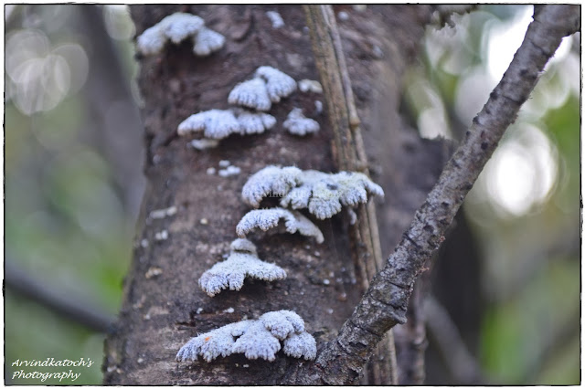 Life, Fungus, Fungus on Tree, Shape of Fungus,