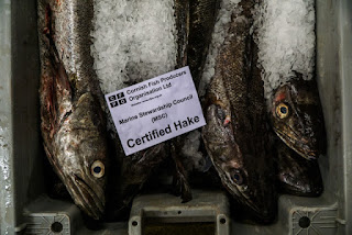 MSC Cornish hake fish