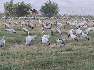 Hula Valley Nature Reserve