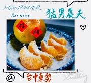 猛男農夫 椪柑,別看我其貌不揚,我可是台中東勢最好吃的橘子