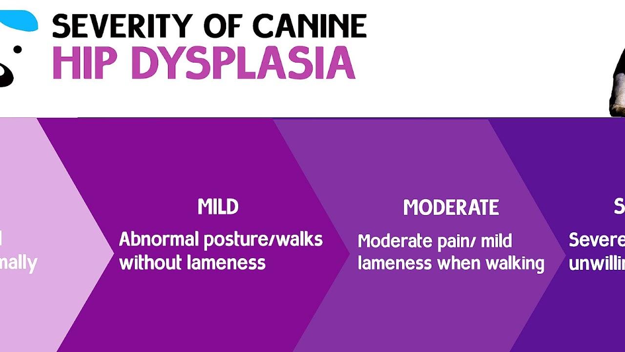 Dog Hip Injury Symptoms - Injury Choices