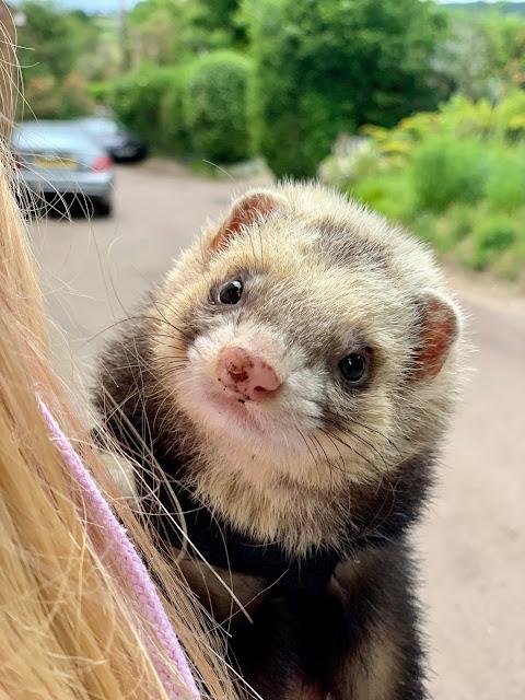 Woffles the ferret
