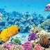 ¿Por qué es importante la Gran Barrera de Coral?