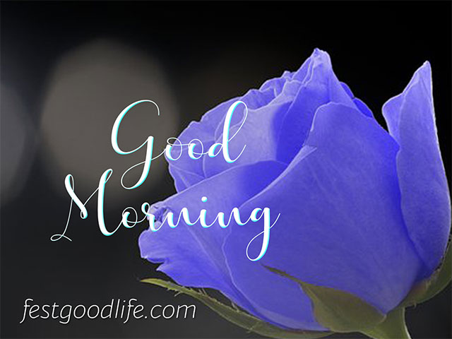 blue rose good morning images with flowers hd