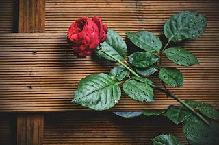 En Güzel Vatan Konulu Şiirler ile ilgili aramalar vatan ile ilgili şiirler ünlü şairlerden vatan ile ilgili şiirler kıtalık vatan ve bayrak şiirleri vatan sevgisi şiirleri mehmet akif ersoy vatan şiiri arif nihat asya vatan şiirleri necip fazıl yurt sevgisi ile ilgili şiirler ağlatan vatan şiirleri
