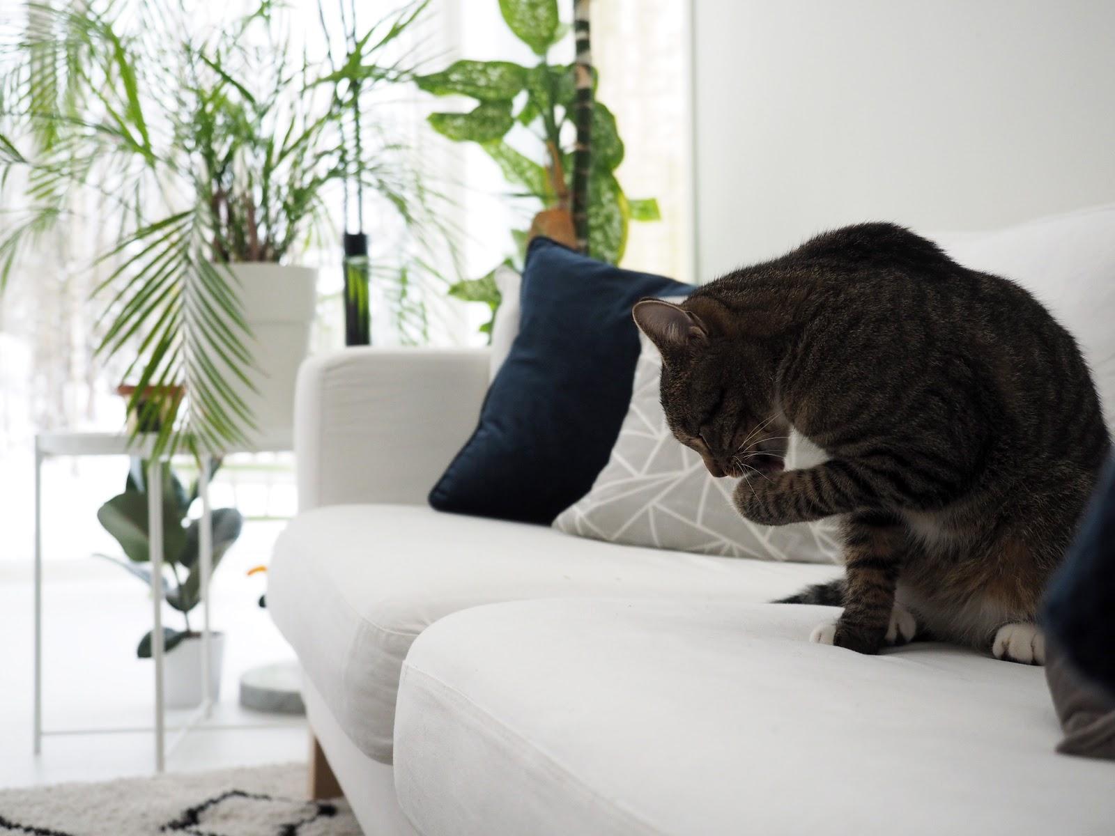 Olohuone, sisustus, kissa, valkoinen sisustus