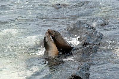 Galapagos Sea Lions and Fur Sea Lions