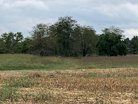 Wilsons Creek battlefield