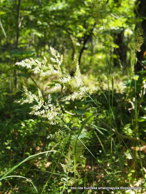 las w wawrze , lasy mazowieckie , grzybobranie , wycieczka , na grzyby , na jagody , co słychać w lesie , las lipcowy , prosto z lasu , wieści podmiejskie , grzyby , kwiaty