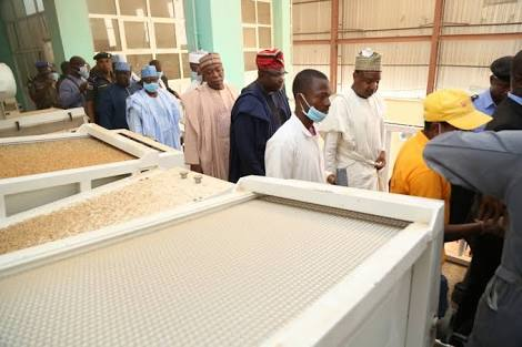 Why Nigerian Rice Is Expensive and Scarce - Federal Govt.
