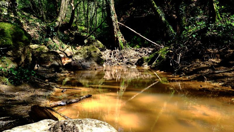 Acqua gialla in mezzo al bosco alla Cascata della Diosilla