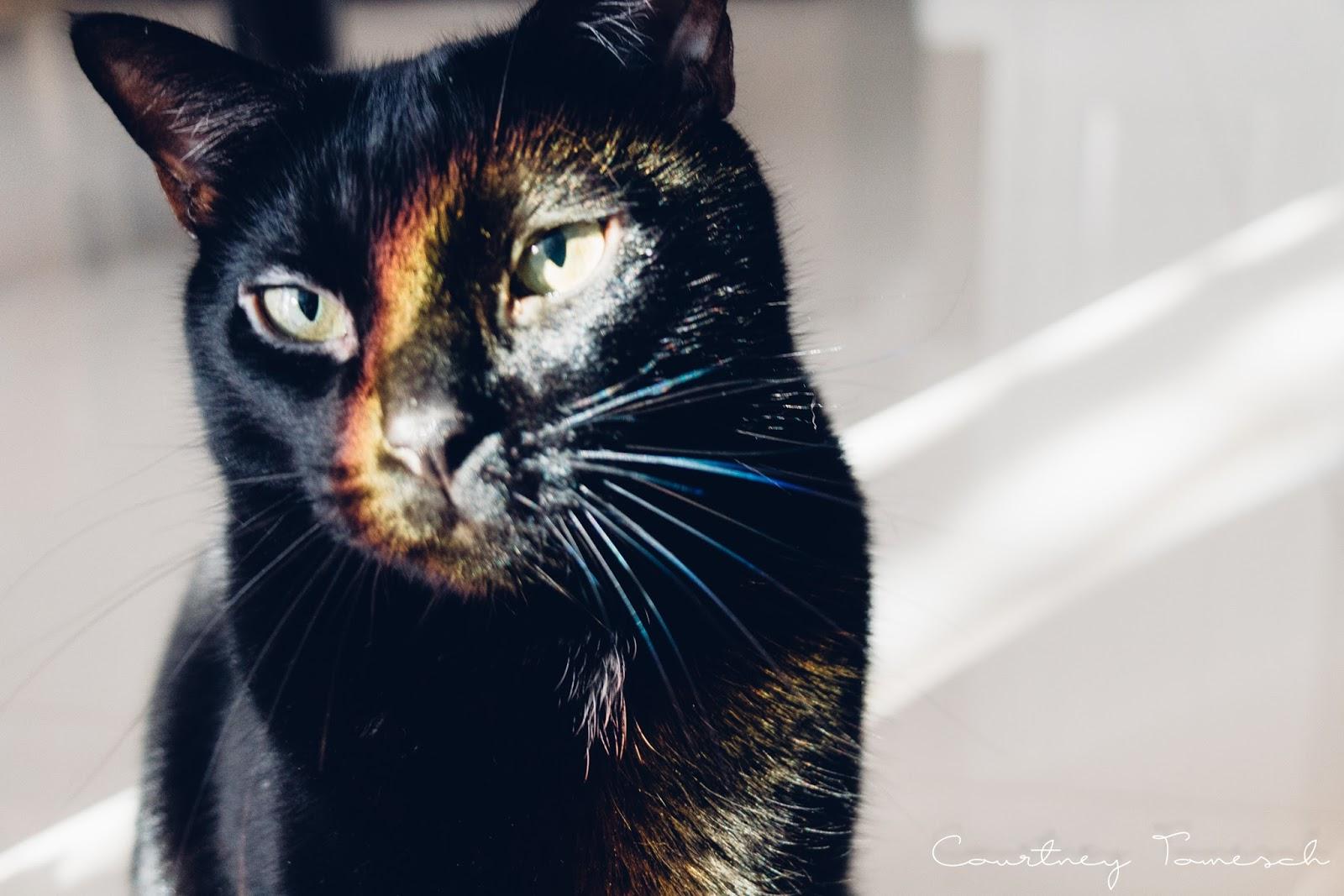 Courtney Tomesch Cats Meelo Cruz Katana