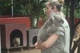 A keeper Holds A koala while a wombat watches at Cairns Tropical Zoo.