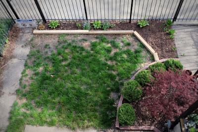 lawn seed yard curb appeal