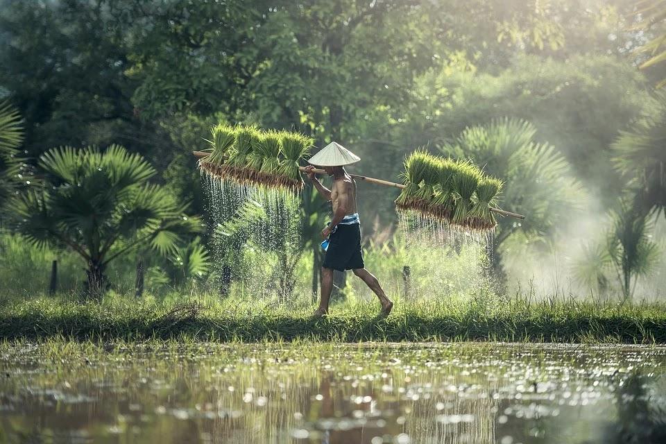 Realisasi Asuransi Bagi Para Petani